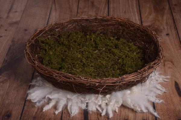 Cypress nest