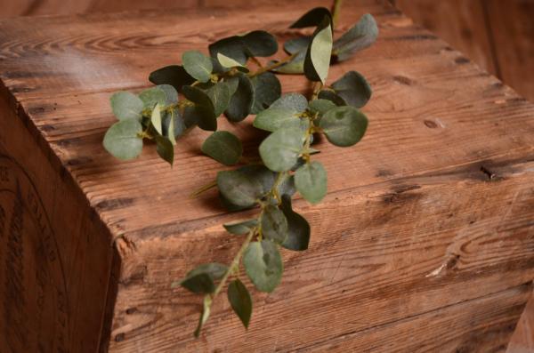 Vara de eucalipto 75 cm