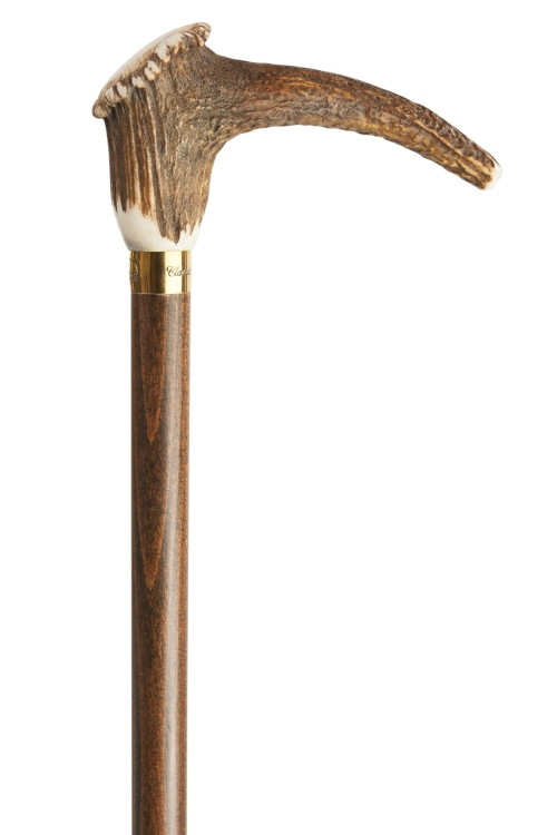 Staghorn Crown Walking Stick with Gilt Collar